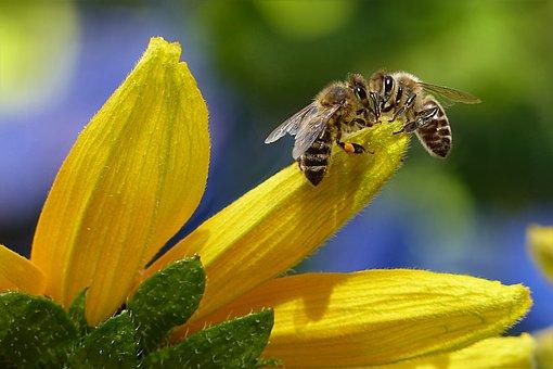 mydło pszczele